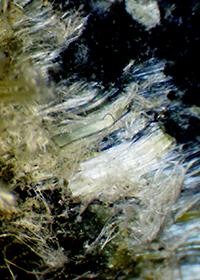 Asbestor fibers